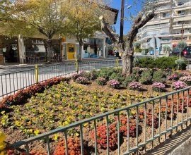 Δήμος Κιλκίς: Φθινοπωρινές ανθοσυνθέσεις στην πόλη