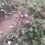Ζημιές σε καλλιέργειες από βροχοπτώσεις στο Ν. Τρικάλων