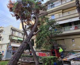 Πτώση δέντρου πάνω σε πολυκατοικία στην Καλαμαριά – Άμεση η επέμβαση της Αντιδημαρχίας Καθαριότητας