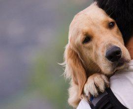 ΥΠΕΣ: 40 εκατ. ευρώ στους Δήμους της χώρας, για τα ζώα συντροφιάς